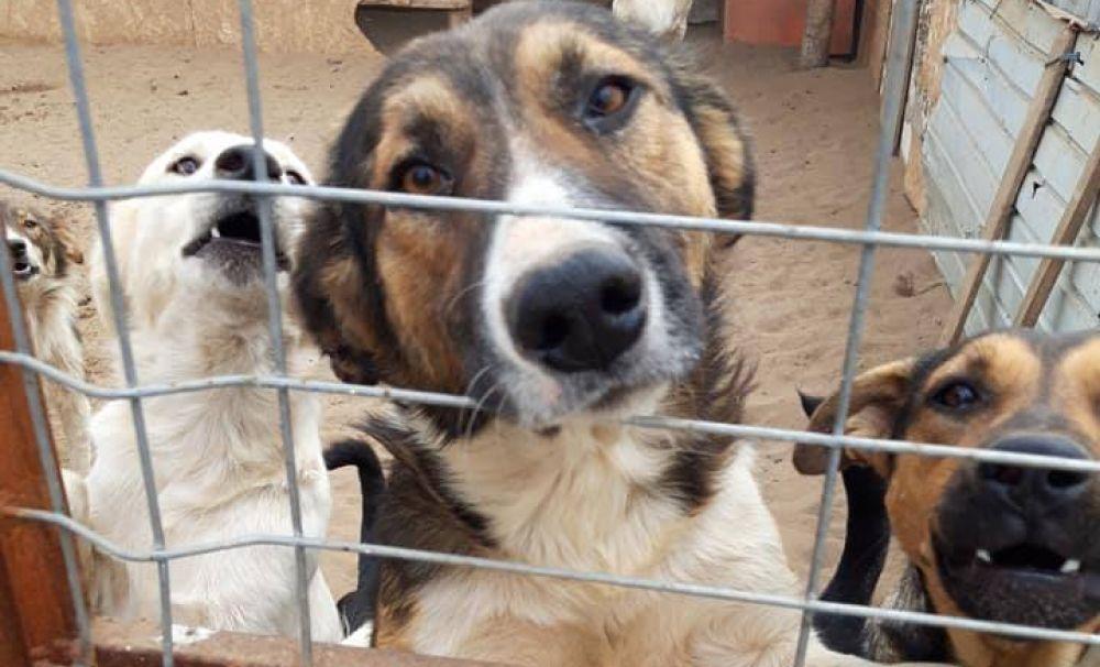 Conturile Asociaţiei Măriuţa, blocate! Un câine scăpat din adăpost ar fi mâncat 80 de oi de la o stână din Desa