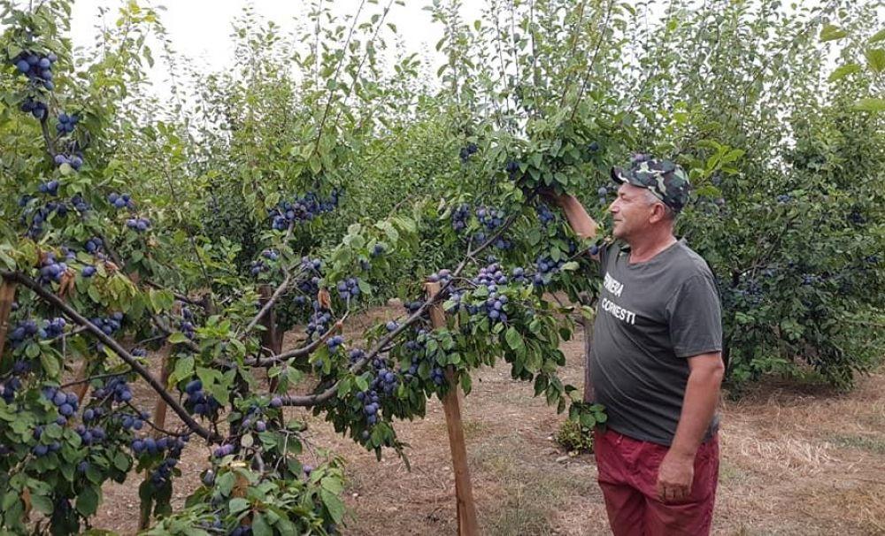 Deţine cea mai mare pepinieră din Oltenia!  Un fost miner, pasionat de cultuivarea pomilor fructiferi