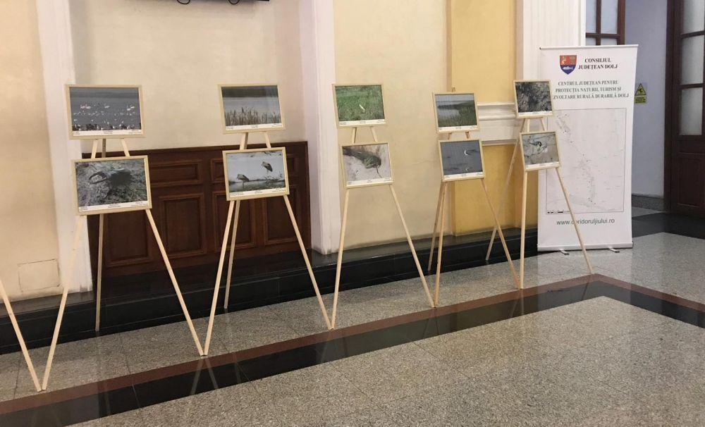 Expoziţie inedită în holul Universităţii din Craiova