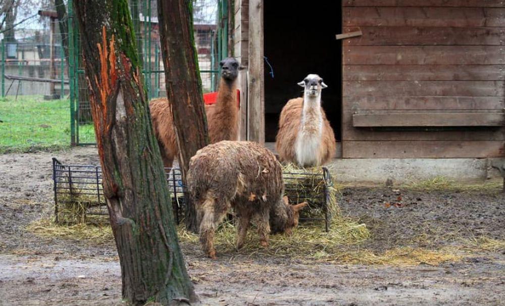 Grădina Zoologică a luat toate măsurile pentru ca animalele să nu sufere din cauza gerului