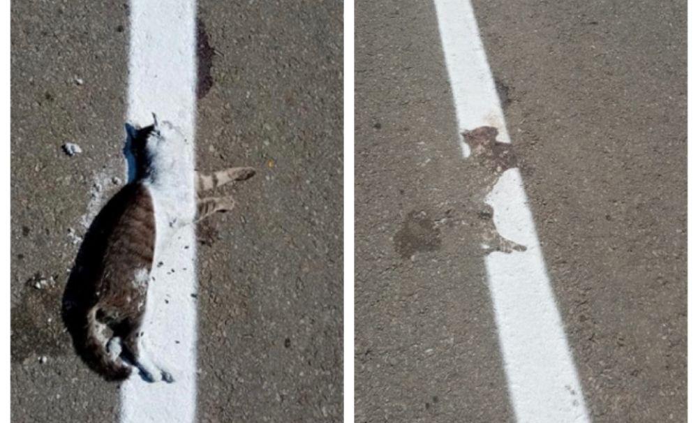 Imagini incredibile într-o localitate din Dolj!  Au trasat drumul peste o pisică moartă