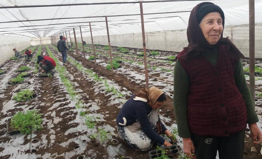 Izbiceni, patria legumelor!  1500 de localnici cultivă în solarii