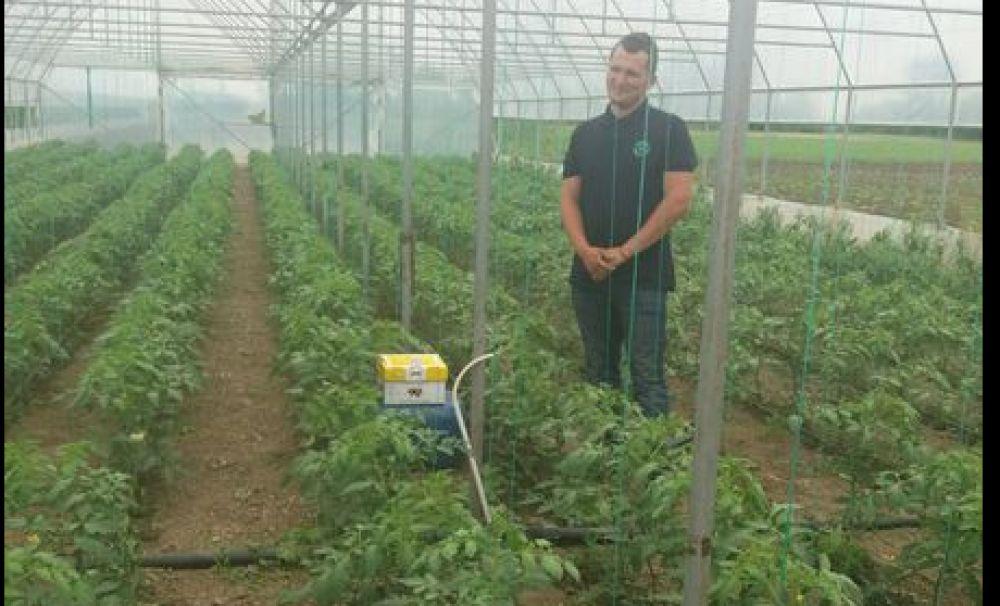 Metodă inedită pentru culturi productive şi bio! Polenizarea cu bondari