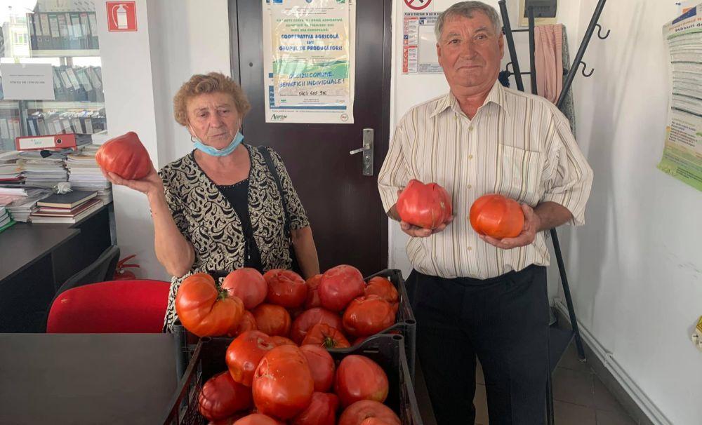 Un oltean cultivă roşii gigant
