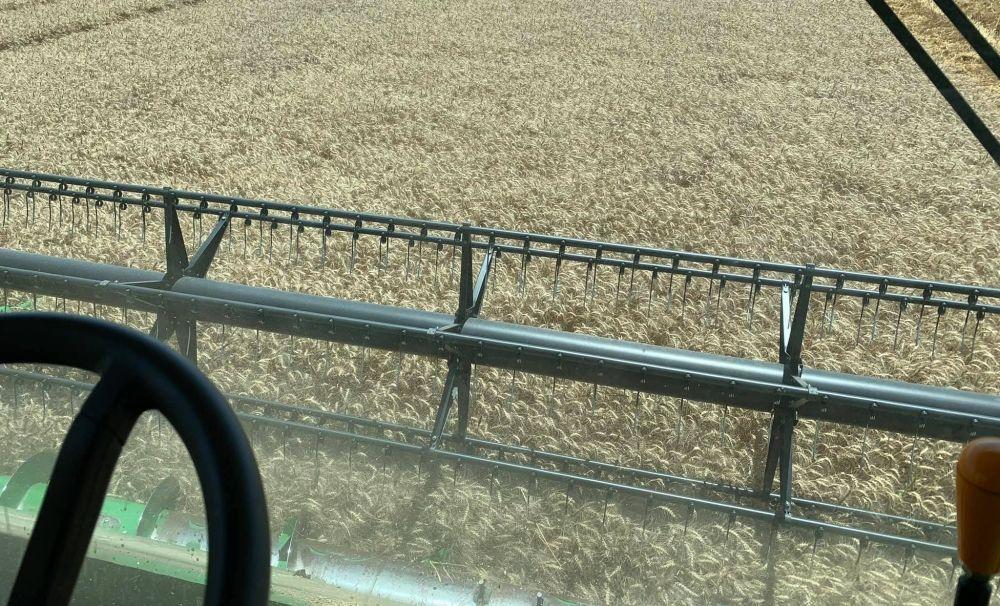 Producţie record de grâu la Staţiunea de Cercetare Agricolă Caracal